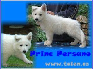 Princ Persano Taien