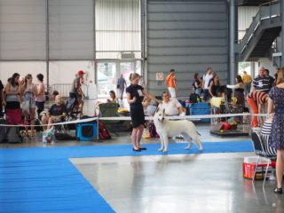 Intercanis – 51.ročník mezinárodní výstavy psů