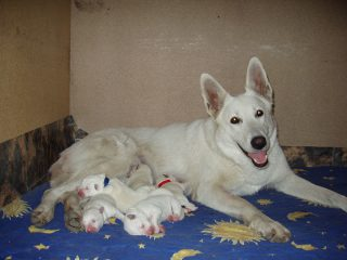 Bella with the puppies