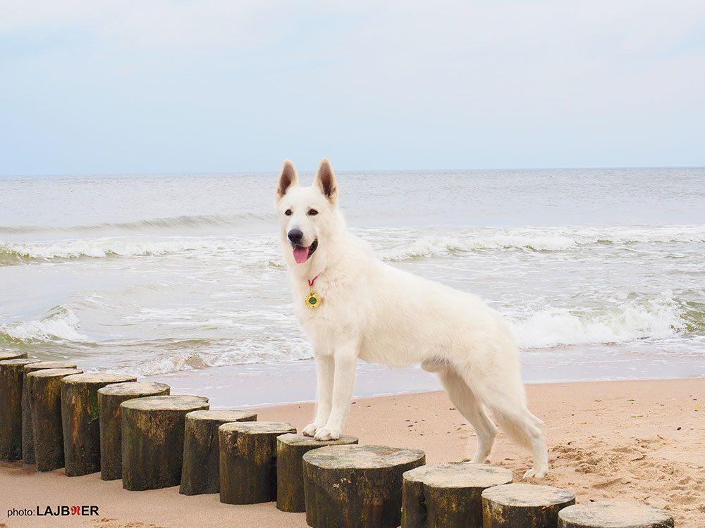 1. Mezinárodní pobřežní výstava psů Kolobrzeg