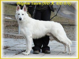 Pilgrim Taien