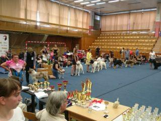 Regional dog show Kladno