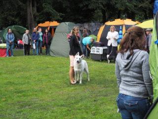 Regional dog show