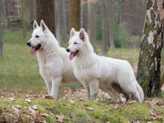 Axel 2 years (left)