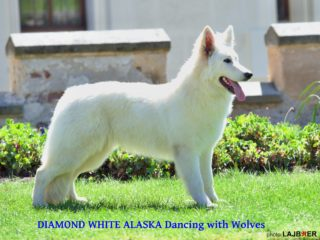 DIAMOND White Alaska