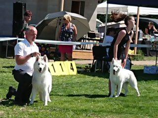 Regional dog show Horní Počernice