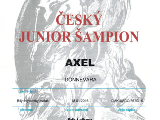 Junior Champion Czech Republic