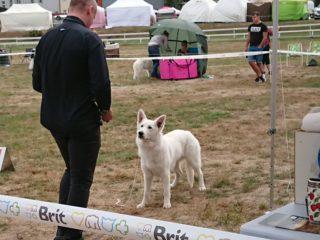 Interdog Bohemia 2018