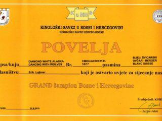 Grand Champion BiH