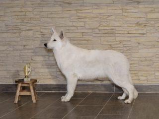 Hanácká national dog show