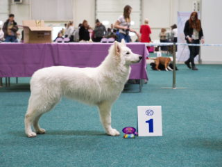 Champion of Champions + Elite puppy show