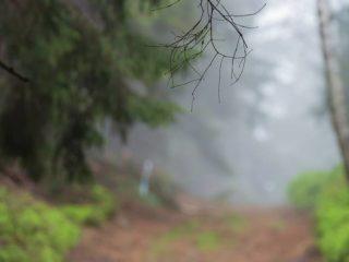 Canicross závod Leskros – Ještěd 3/4