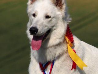 MVP Velká Ida 2019, SK