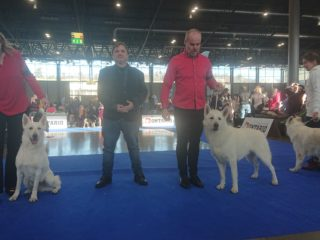 National dog show Brno, January 2020