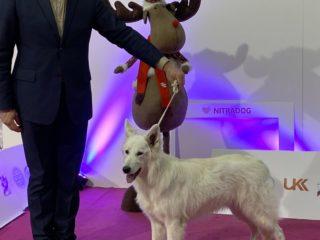 3x MVP Nitra, prosinec 2019