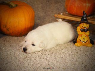 Halloween - 2 week